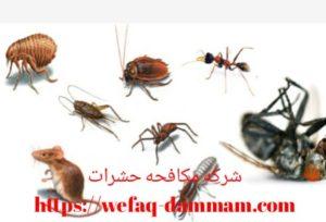 اسعار شركة مكافحة الحشرات